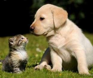 Accoglienza di animali domestici